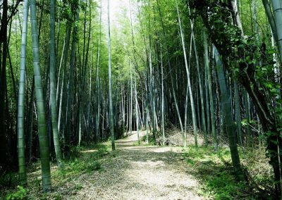 bamboo forest in Shikoku