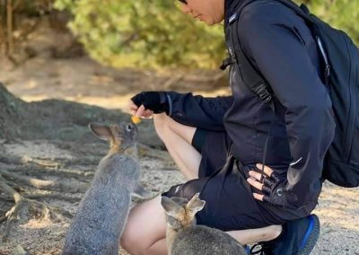 A guest feeds the wildlife on rabbit island - Shimanami Kaido